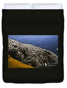 Gannets At Cape St. Mary's Ecological Bird Sanctuary Duvet Cover by Elena Elisseeva