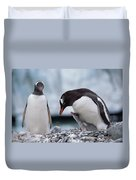 Gentoo Penguin With Chick Begging Duvet Cover by Konrad Wothe