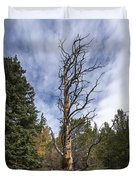 Gnarly Tree - Pancake Rocks - Divide Colorado Duvet Cover by Brian Harig