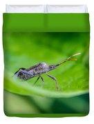 Grey Plant Bug 1 Duvet Cover by Douglas Barnett
