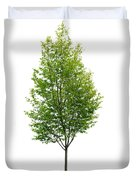 Isolated Young Tree Duvet Cover by Elena Elisseeva