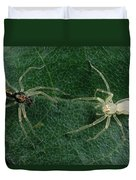 Jumping Spider Colorful Male And Pale Duvet Cover by Mark Moffett
