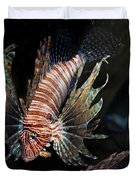 Lionfish 5d24143 Duvet Cover by Wingsdomain Art and Photography