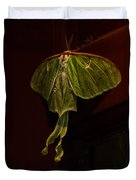 Luna At My Door Duvet Cover by Susan Capuano