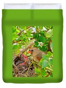 Mama Bird Duvet Cover by Frozen in Time Fine Art Photography