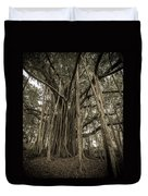 Old Banyan Tree Duvet Cover by Adam Romanowicz