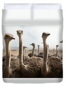Ostrich Heads Duvet Cover by Johan Swanepoel