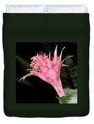 Pink Bromeliad Bloom - Close Up Duvet Cover by Kaye Menner