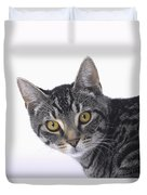 Portrait Of A Grey Tabby Catvancouver Duvet Cover by Thomas Kitchin & Victoria Hurst