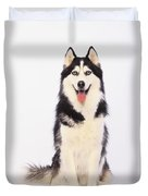 Portrait Of A Siberian Huskybritish Duvet Cover by Thomas Kitchin & Victoria Hurst