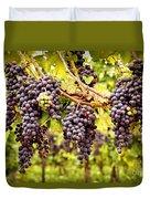 Red grapes in vineyard Duvet Cover by Elena Elisseeva