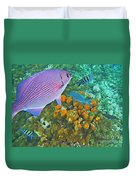 Reef Life Duvet Cover by John Malone