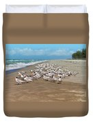 Royal Terns On The Beach Duvet Cover by Kim Hojnacki