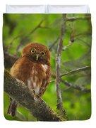 Rufous Morph Costa Rican Pygmy-Owl Duvet Cover by Tony Beck