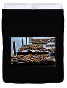 Sea Lions At Pier 39  Duvet Cover by Garry Gay