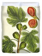 The Fig Tree Duvet Cover by Elizabeth Blackwell