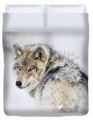 Timber Wolf Pictures 1268 Duvet Cover by World Wildlife Photography