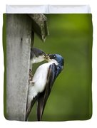 Tree Swallow Feeding Chick Duvet Cover by Christina Rollo