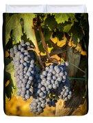 Tuscan Vineyard Duvet Cover by Brian Jannsen