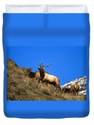 Watchful Bull Duvet Cover by Mike  Dawson