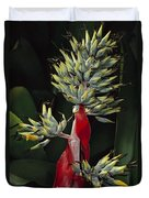 Atlantic Forest Bromeliad Brazil Duvet Cover by Mark Moffett