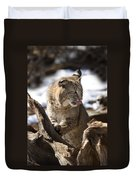 Bobcat Duvet Cover by Jeff Grabert