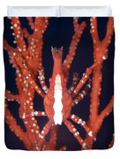 Bright Red Crab On Fan Coral, Papua New Duvet Cover by Steve Jones