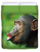 Chimpanzee Pan Troglodytes Adult Female Duvet Cover by Cyril Ruoso