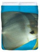 Longfin Spadefish, Papua New Guinea Duvet Cover by Steve Jones