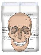 Illustration Of Anterior Skull Duvet Cover by Science Source