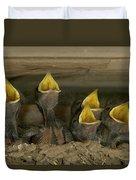 Barn Swallow Hirundo Rustica Chicks Duvet Cover by Cyril Ruoso