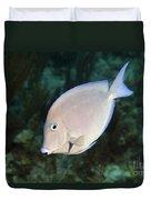 Blue Tang On Caribbean Reef Duvet Cover by Karen Doody