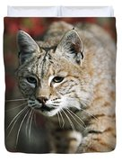 Bobcat Felis Rufus Duvet Cover by David Ponton