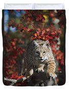 Bobcat Felis Rufus Walks Along Branch Duvet Cover by David Ponton