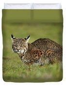 Bobcat Juvenile Santa Cruz California Duvet Cover by Sebastian Kennerknecht