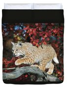 Bobcat Walks On Branch Through Hawthorn Duvet Cover by David Ponton