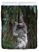Brown Throated Three Toed Sloth Mother Duvet Cover by Suzi Eszterhas