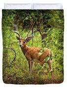 Buck In Full Velvet Duvet Cover by Tamyra Ayles
