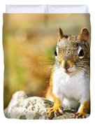 Cute Red Squirrel Closeup Duvet Cover by Elena Elisseeva