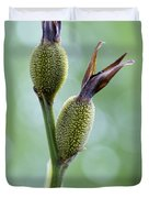 Dazzling Canna Seed Pods Duvet Cover by Kathy Clark
