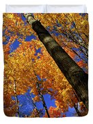 Fall maple trees Duvet Cover by Elena Elisseeva