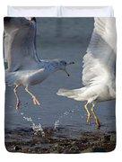Fighting Gulls Duvet Cover by Karol  Livote