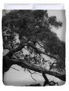 Gnarly Cedar Tree Duvet Cover by Teresa Mucha
