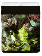 Green Arrowhead Crab, Papua New Guinea Duvet Cover by Steve Jones