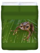 Ground Frog Nakanai Mts Papua New Guinea Duvet Cover by Piotr Naskrecki