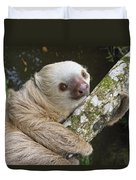 Hoffmanns Two-toed Sloth Costa Rica Duvet Cover by Suzi Eszterhas