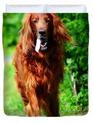Irish Setter V Duvet Cover by Jenny Rainbow