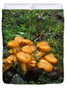 Jack OLantern Mushrooms 12 Duvet Cover by Douglas Barnett