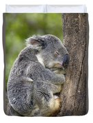 Koala Phascolarctos Cinereus Sleeping Duvet Cover by Pete Oxford