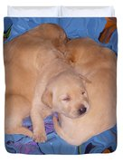 Lab Pups 2 Duvet Cover by Aimee L Maher Photography and Art